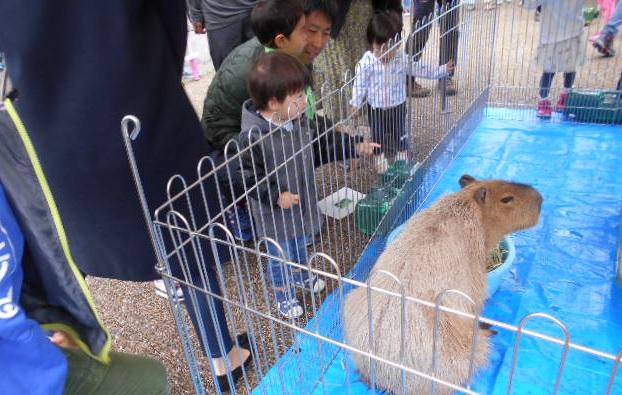 20190515-ふれあい動物園①.jpg